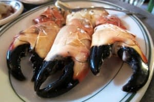 Florida Stone Crab Source: Wally Gobetz on flickr (CC BY-NC-ND 2.0)